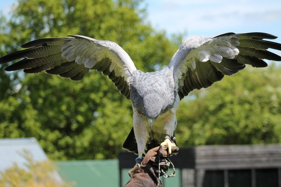 Bird of Prey Full Day Experience for 2 people
